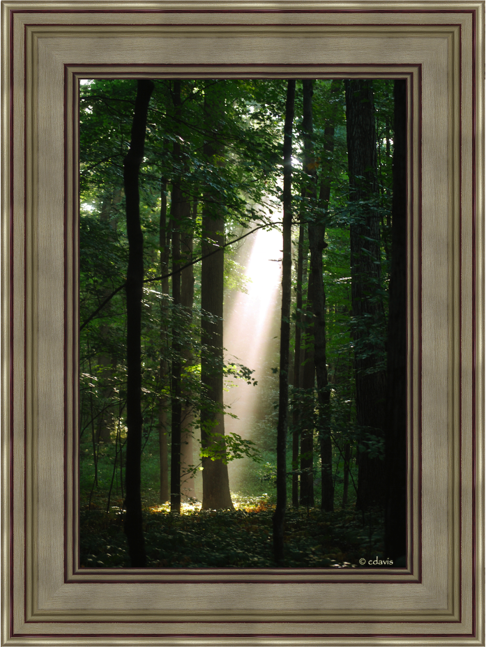 Sacred Grove (19x25 Framed Art) - Deseret Book